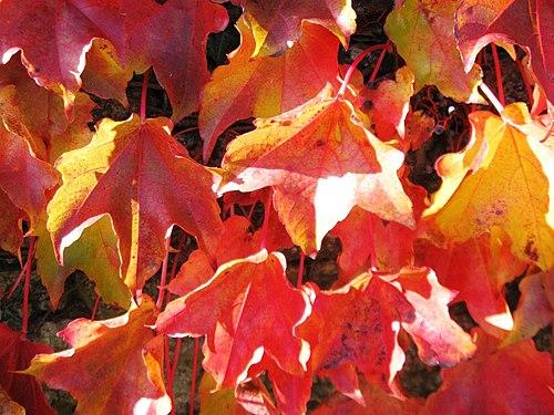 Couleurs d'automne04.jpg