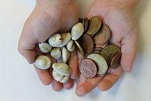 [Bild: 220px-Cowry_money_Monetaria_annulus_an_E...oins_2.JPG]