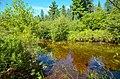 Creek - Flickr - wackybadger (20).jpg