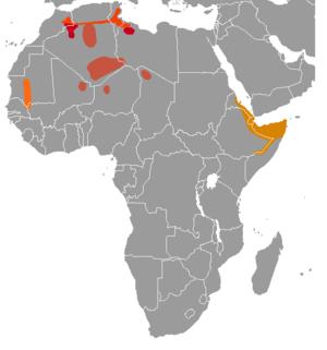 Gundi - Image: Ctenodactylidae range map
