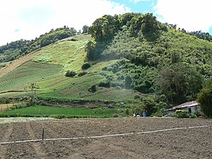 Agriculture in Panama - A farm in Panama.