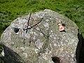 Cup-Marked stone, Ballynoe - geograph.org.uk - 35331.jpg