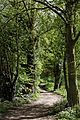 Curved woodland footpath at west from church Magdalen Laver Essex England.jpg