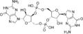 Cyclic diguanylate.png