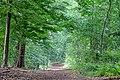 Dülmen, Börnste, Waldweg -- 2020 -- 7850.jpg