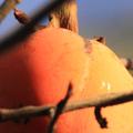 Daala original Fruits.png