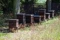 Dadant beehives.jpg
