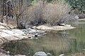 Davis Creek Park - panoramio (17).jpg