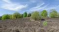 De-Meinweg-Landschaft-Fruehjahr-2013-05.jpg