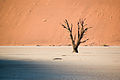 DeadTree@Deadvlei.jpg