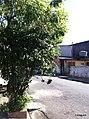 Diadema - SP - panoramio (7).jpg