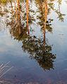 Diakonievene. Natuurgebied van It Fryske Gea 04.jpg