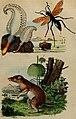 Dictionnaire pittoresque d'histoire naturelle et des phénomènes de la nature (1838) (14780798792).jpg