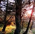 Diell ne pyll - panoramio.jpg