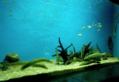 Different size fishes groups bangalore aquarium, india.png
