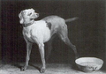 Dog chimneyboard signed byJB Oudry 1751 BurrellCollection Glasgow.png