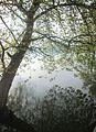 Dojran Lake 147.jpg