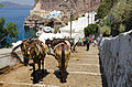 Donkey trail - Fira - Thira - to Mesa Gialos port - Santorini - Greece - 05.jpg