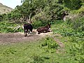 Donkeys in Cornwall.jpg
