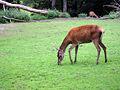 Dortmund-Zoo-IMG 5481-a.jpg
