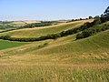 Downland, Sydling St Nicholas - geograph.org.uk - 908358.jpg