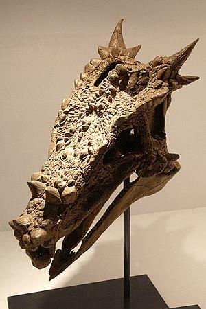 Dracorex - 01
