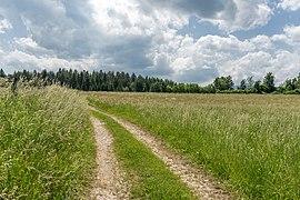 Ebenthal Radsberg Landschaft südlich der Ortschaft 12062019 6742.jpg