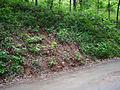 Echinacea laevigata Habitat Loss.jpg