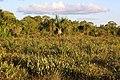Ecosistema protegido de Sabanas de arenas blancas.jpg