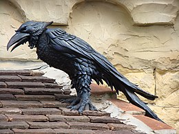 Image Result For Ravens
