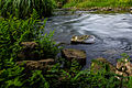 Eger Stream in Balaton-felvidek Monostorapati-02.jpg