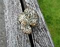 Ein Pilz im Tal der Feitelmacher, Trattenbach (4).jpg