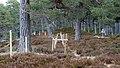 Electric Fence (Glen Lui) on Mar Lodge Estate (15MAR13) (18).jpg