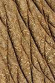 Elephas Maximus Skin.jpg