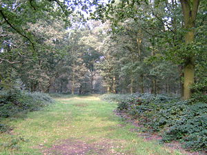 Epping Forest near Epping