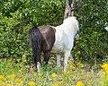 Equus SNY01733 (51317457376).jpg