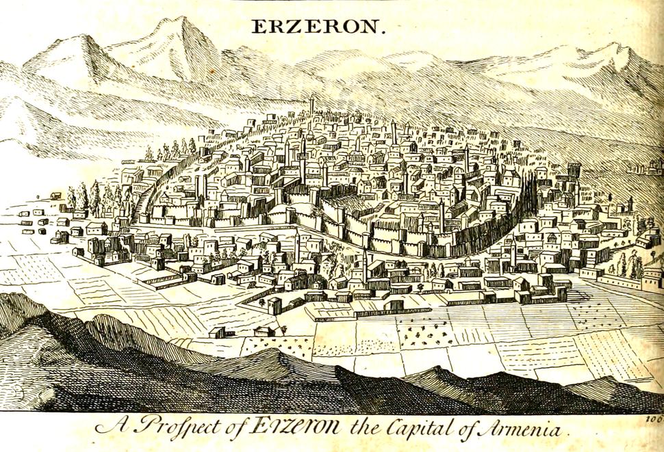 Erzeron Tournefort