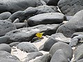 Espanola - Hood - Galapagos Islands - Ecuador (4870945941).jpg