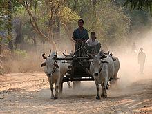 народ бирмы