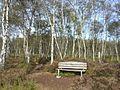 Everstenmoor (Heide)-01.JPG