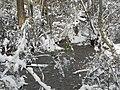 FL Swamp in Snow (5303631177).jpg