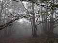 Faggeto nella nebbia 1.jpg