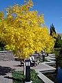 Fall Foliage (2878407142).jpg