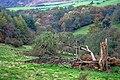 Fallen Tree, Near Crow Nest - geograph.org.uk - 1013515.jpg