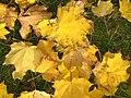Fallleavesnovember2007.jpg
