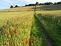 Farmland, Bledlow - geograph.org.uk - 892914.jpg