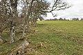 Farmland near Kilnmaichlie - geograph.org.uk - 1806080.jpg