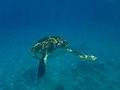 Fauna marina de Barbados 2007 006.jpg
