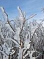 Feldberg-25-02-2009-032.jpg