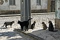 Feral cats in Praia do Pedrógão, Portugal, November, 2018-3.jpg